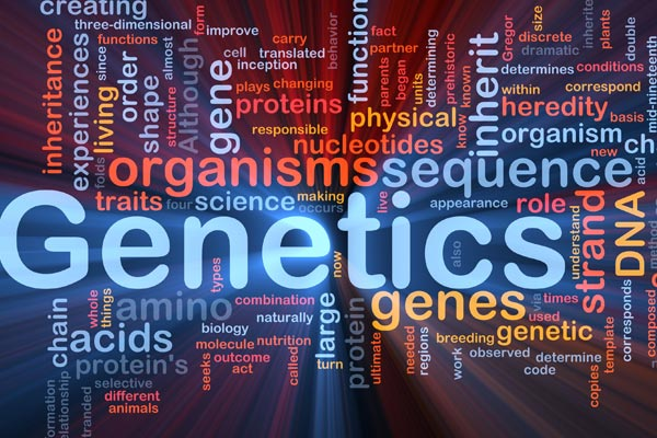 Genetics and Body Building